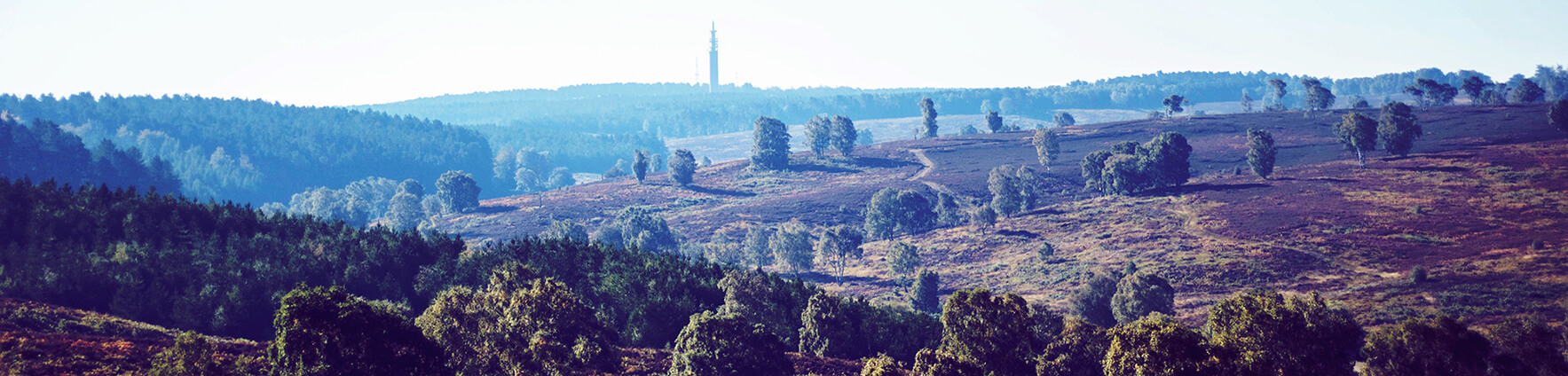 Cannock Chase SAC consultation